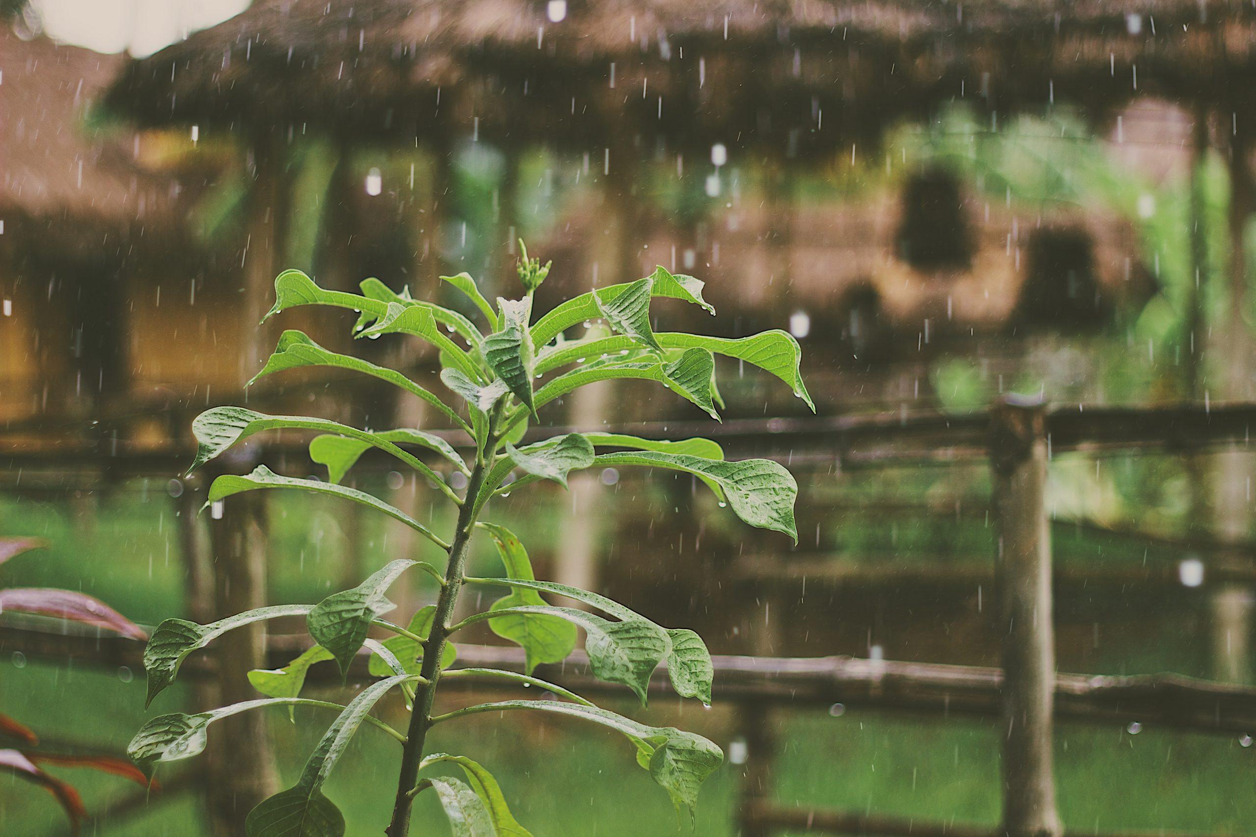 Starker Regen in Uganda