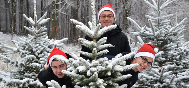 Weihnachtsbäume für einen guten Zweck